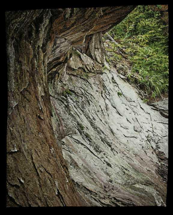 Overhang  by  Carol Shinn