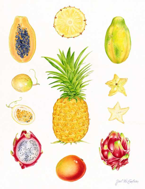 Tropical Fruit with P... by  Joel Carlson - Masterpiece Online