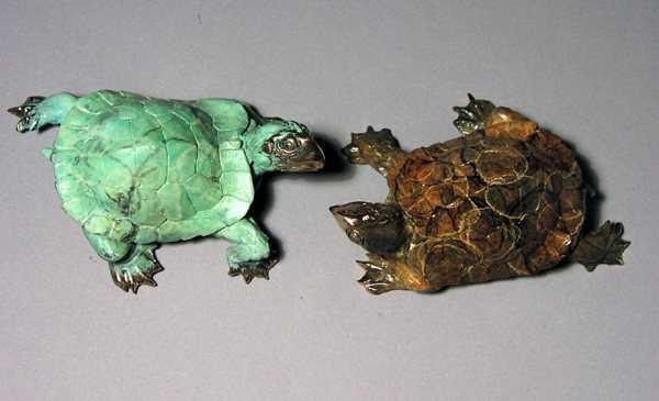 Turtle  by  Dan Chen