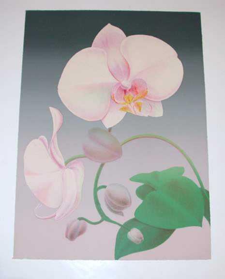 Phaleonopsis by  Ken Bushnell - Masterpiece Online