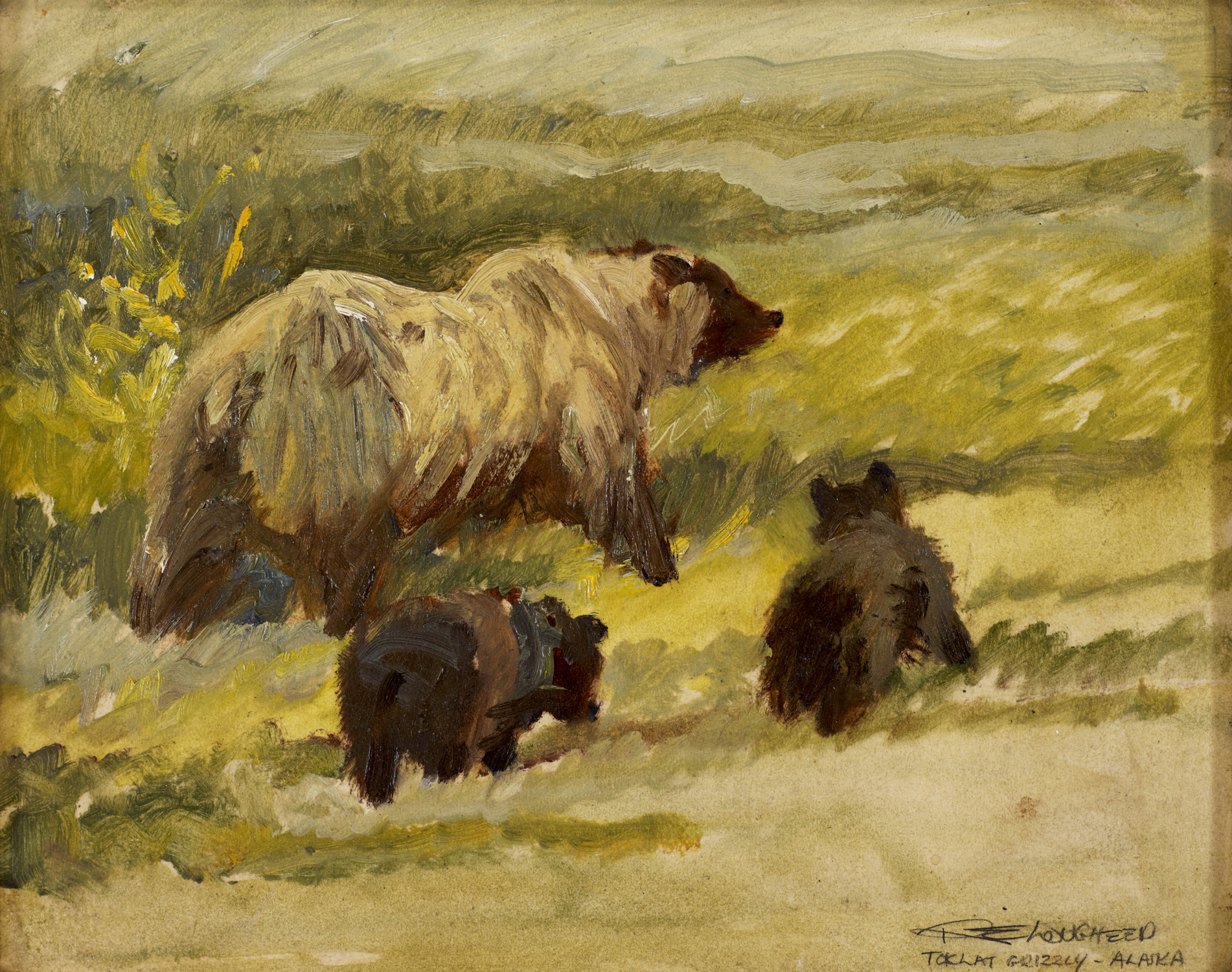 Tolcat grizzly & two ... by  Robert Lougheed - Masterpiece Online