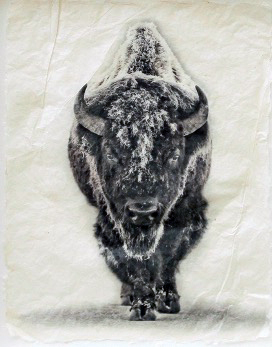 Snow Bison by  Pete Zaluzec - Masterpiece Online