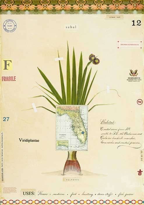 Cabbage Palm with Map...