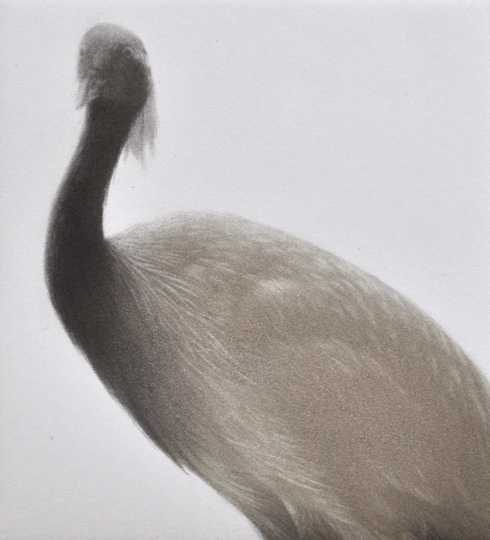 Feathered Light II by  Mikio Watanabe - Masterpiece Online