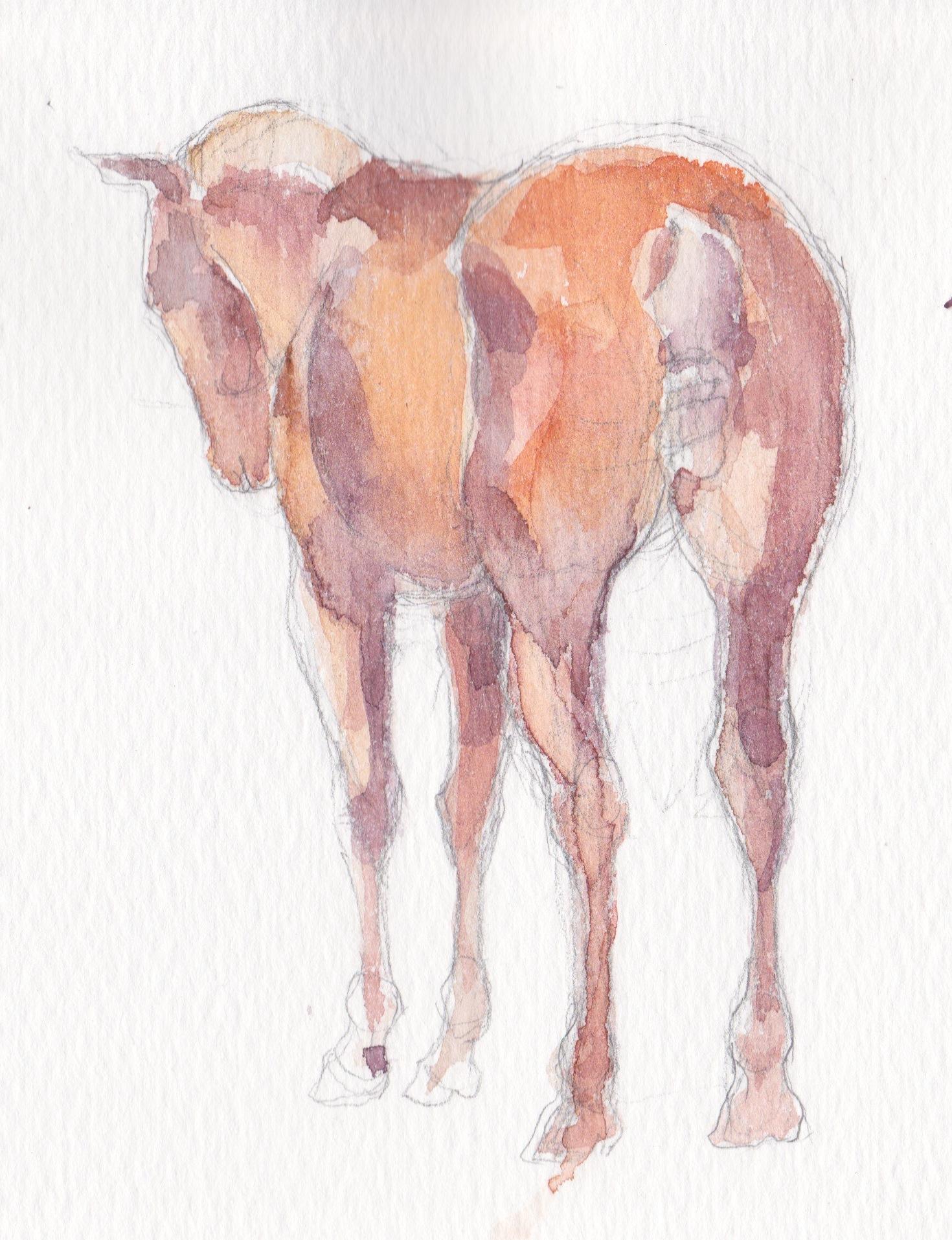 Good Hindquarters by  Melissa Hefferlin - Masterpiece Online