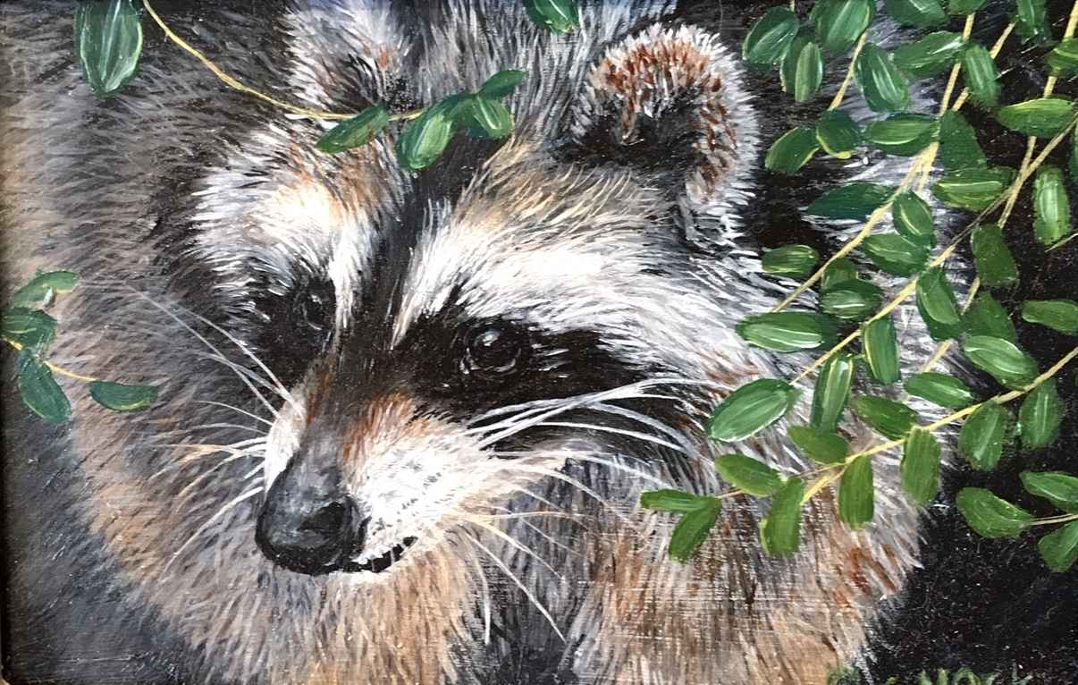 Raccoon II by  Carolyn Mock - Masterpiece Online