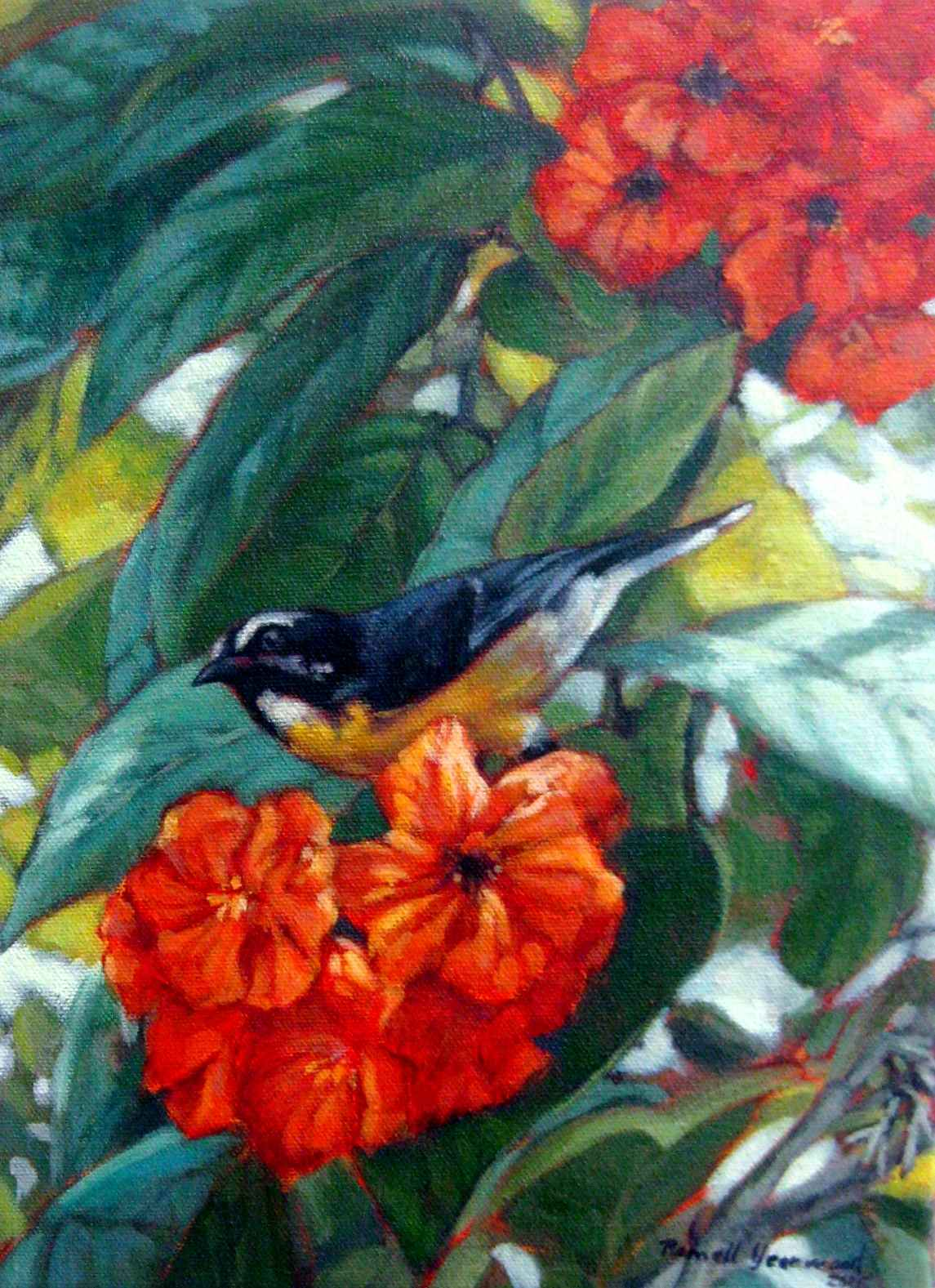 Orange and Bananaquit by  Romell Yearwood - Masterpiece Online