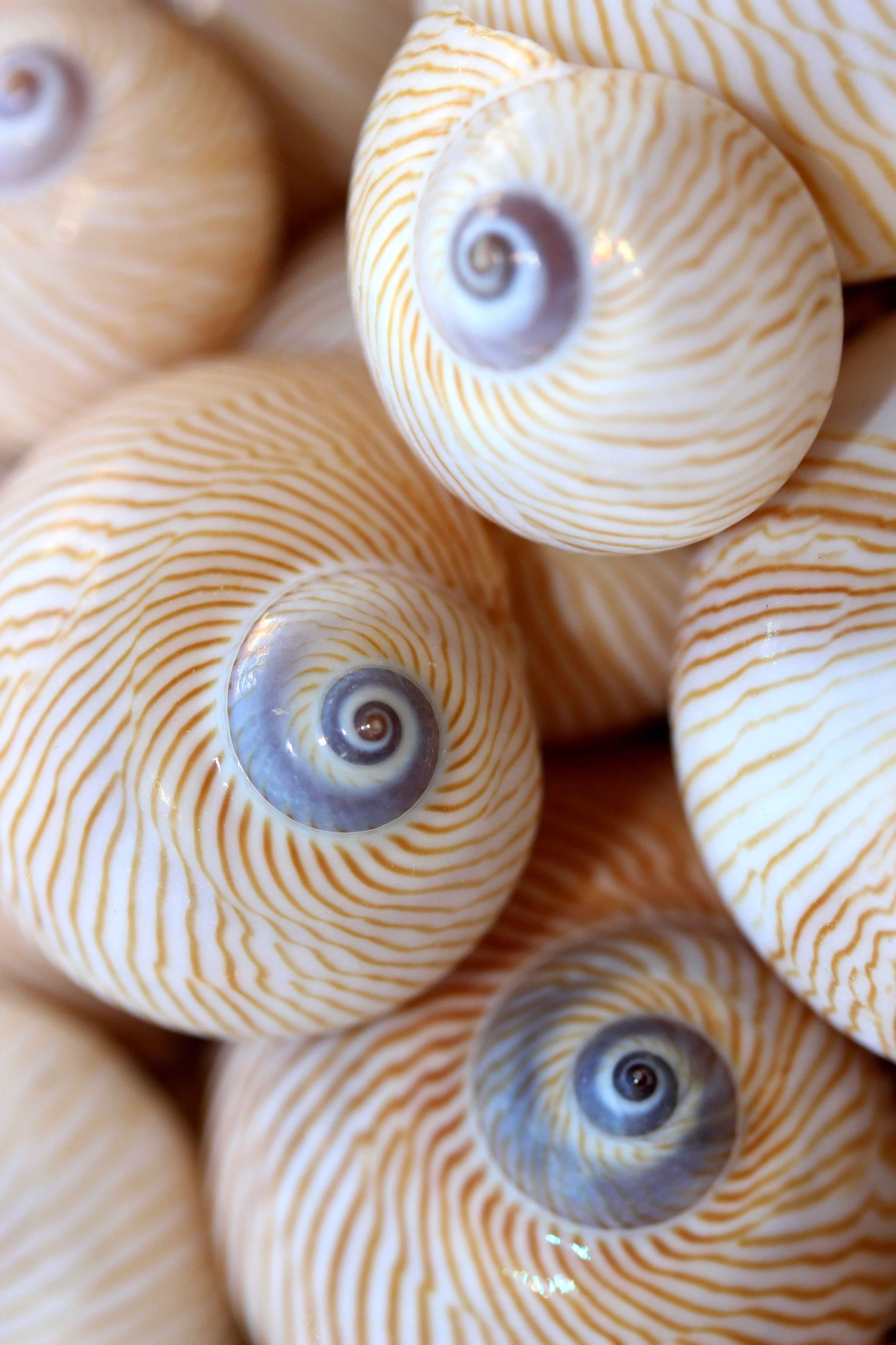 Bubble Shells by  Caitlin Chesne - Masterpiece Online