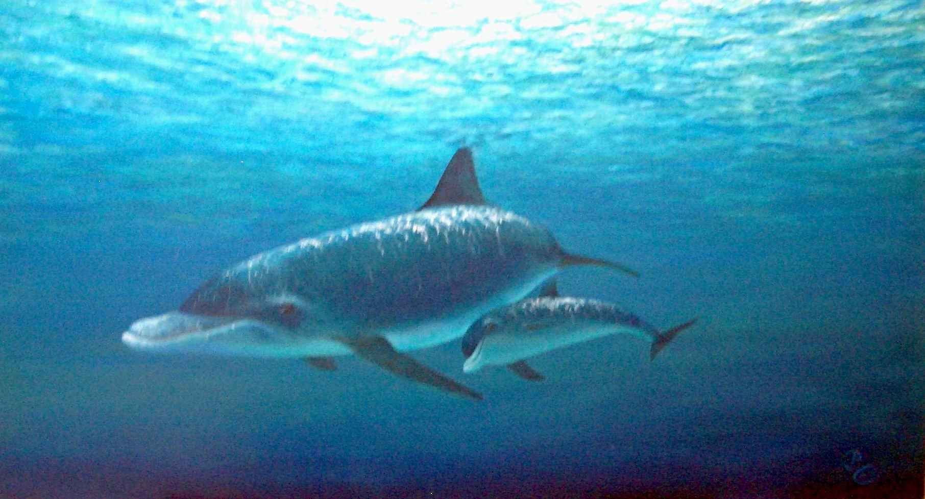 655 Dolphin and Calf by Mr. Patrick Chevailler - Masterpiece Online