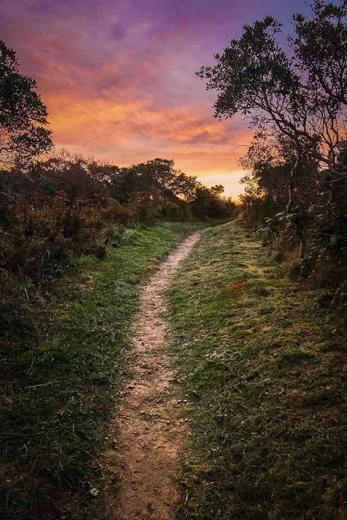 Sunrise Path  by  Peter Mendelson