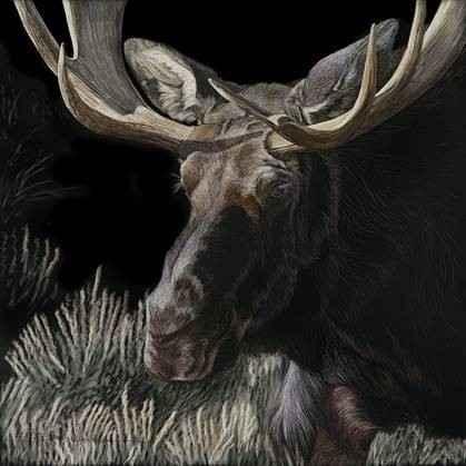 Mystery Moose