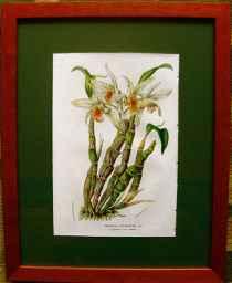 Dendrobium Heterocarp... by  J. Linden - Masterpiece Online