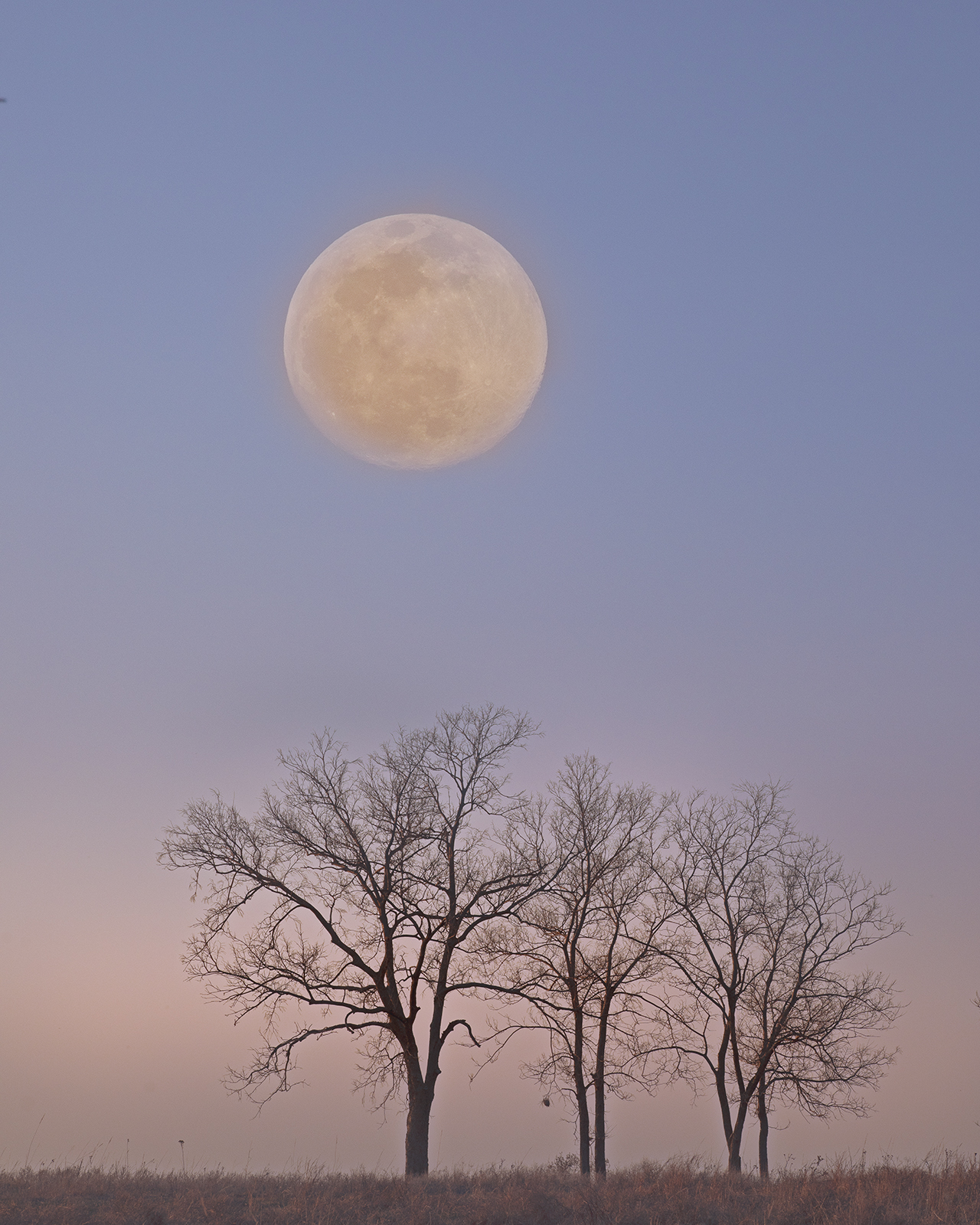 Moon and Trees by  George Jerkovich - Masterpiece Online