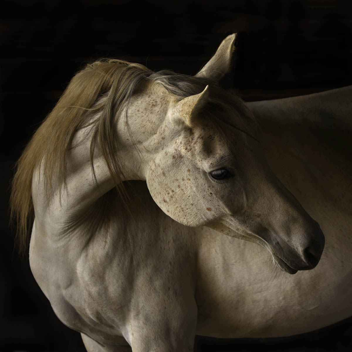 Shalah - Framed by  Tony Stromberg - Masterpiece Online