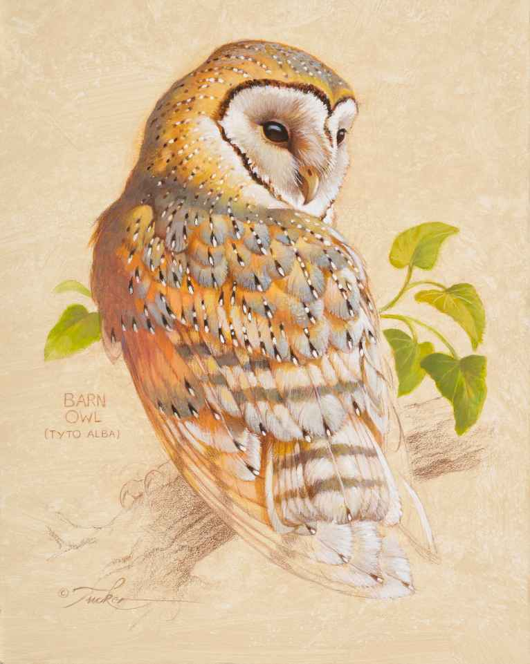 Barn Owl by  Ezra Tucker - Masterpiece Online