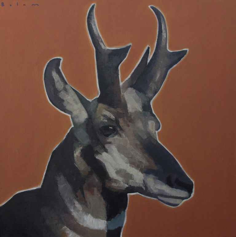 Pronghorn (Bolam)  by  Andrew Bolam