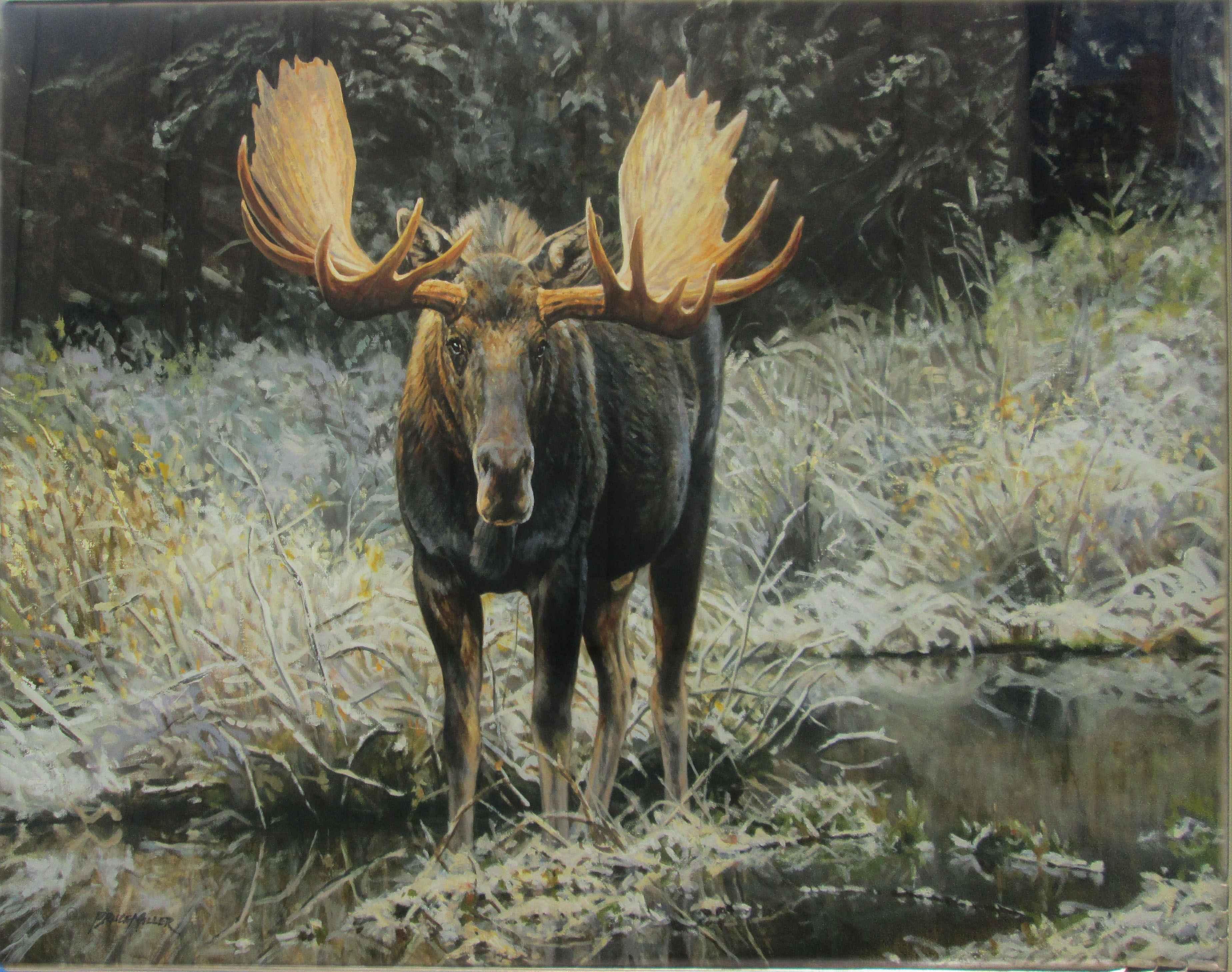 September Moose by  Bruce Miller - Masterpiece Online