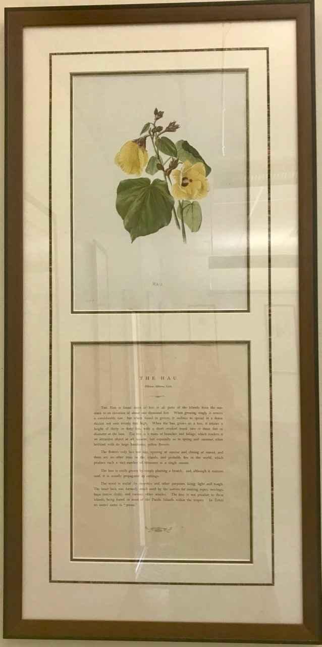 The Hau by  Isabella Sinclair (1840-1890) - Masterpiece Online