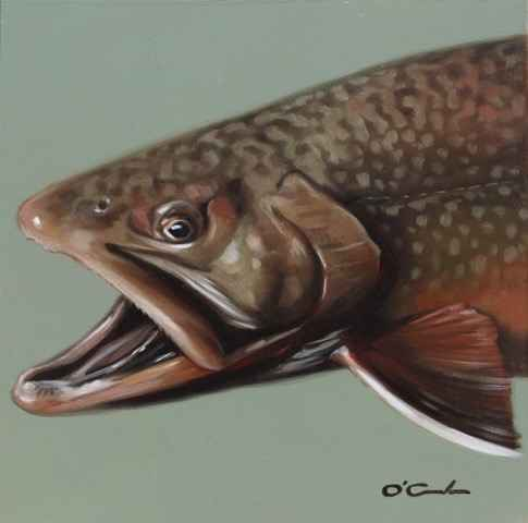 Brook Trout #3 represented by  by  Jennifer O'Cualain