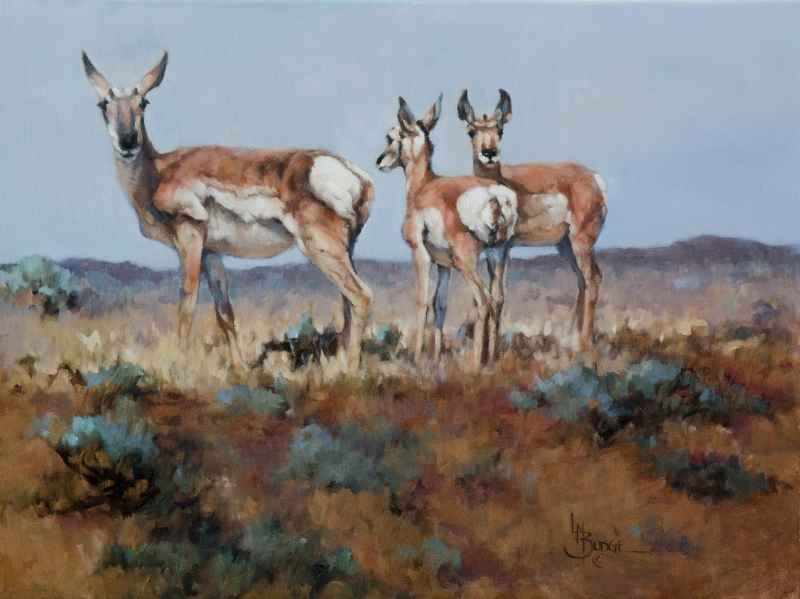 Morning Sun by  Linda Budge - Masterpiece Online