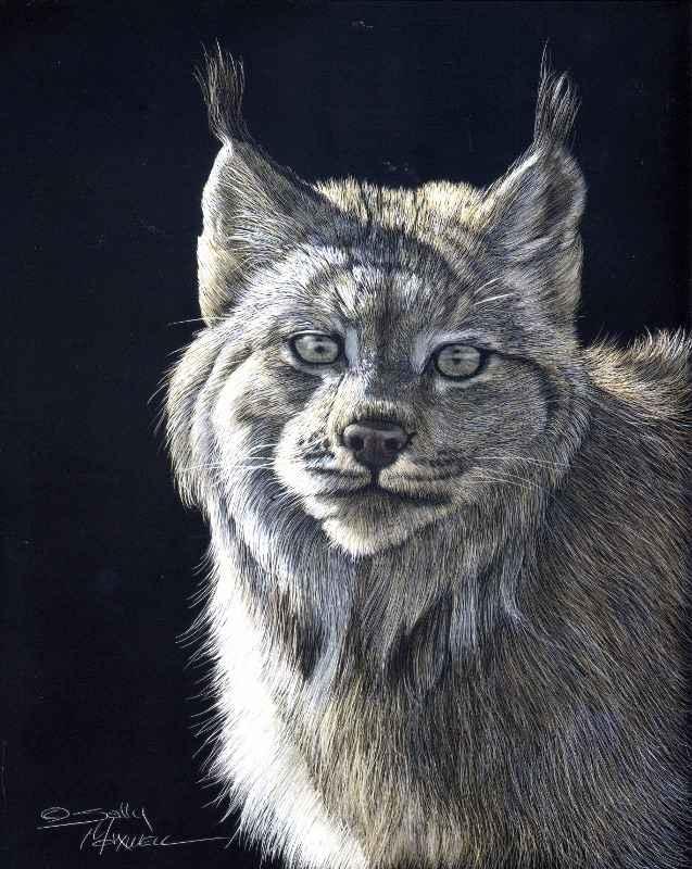 Lynx in Shadow  by  Sally Maxwell