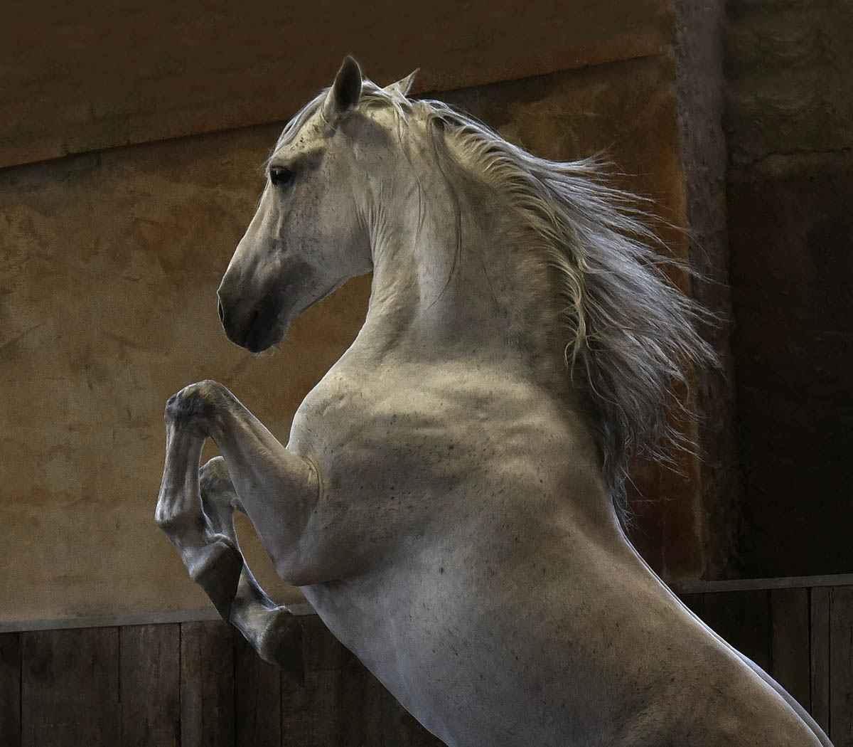 Pegasus - Framed by  Tony Stromberg - Masterpiece Online