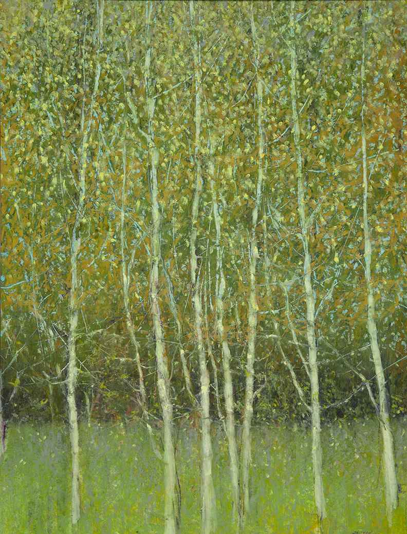 Birches in the Spring