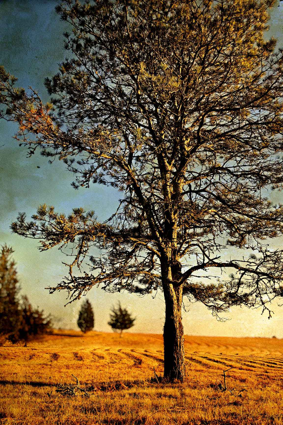 Autumn Light 3 by  Michael Stimola - Masterpiece Online