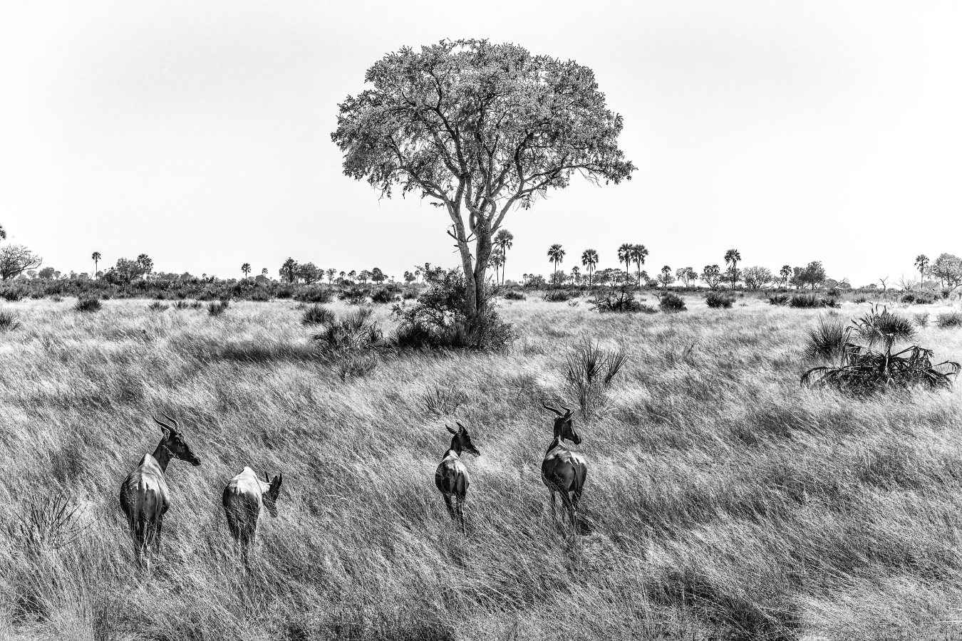 Tsessbe Herd by  Xtina Parks - Masterpiece Online