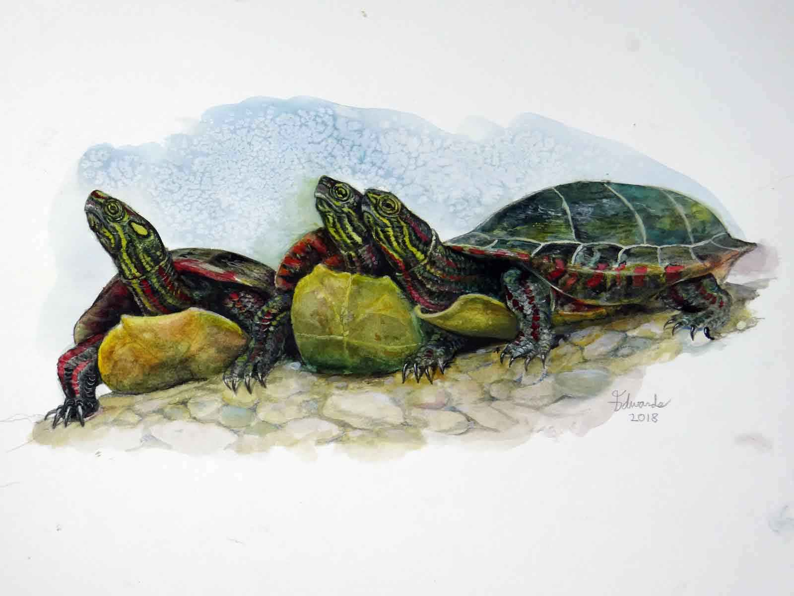 Painted Turtles  by  Wallace Edwards