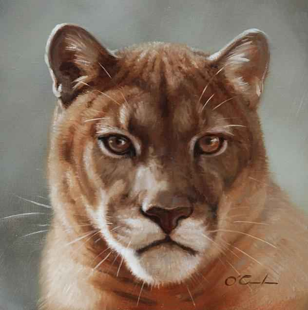 Puma Portrait  by  Jennifer O'Cualain