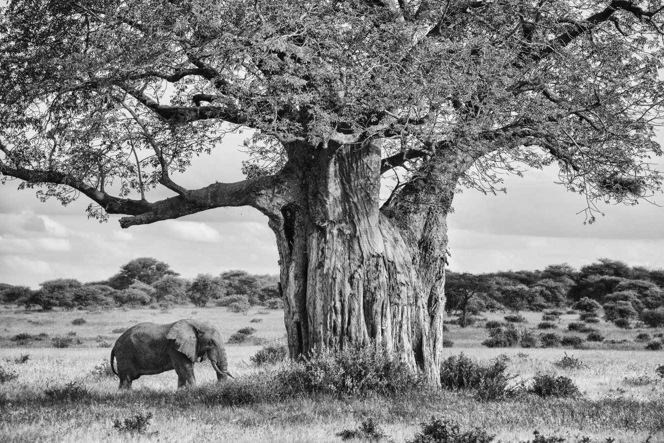Dream of Africa by  Xtina Parks - Masterpiece Online