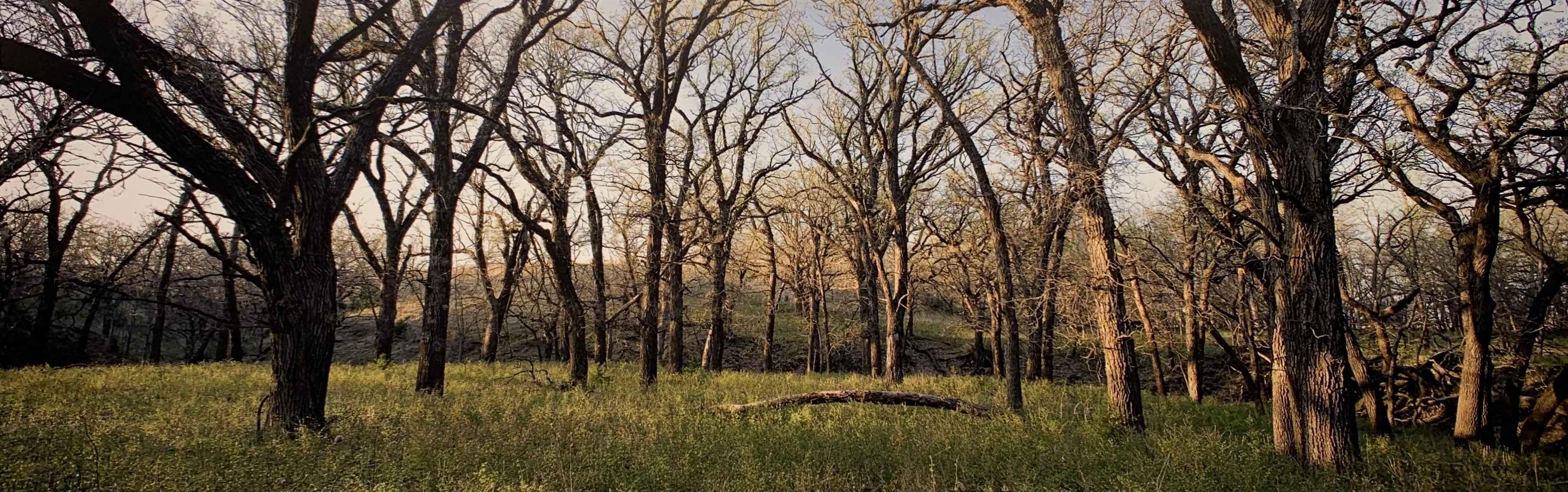 Oak Grove, Ottawa Co.... by  George Jerkovich - Masterpiece Online