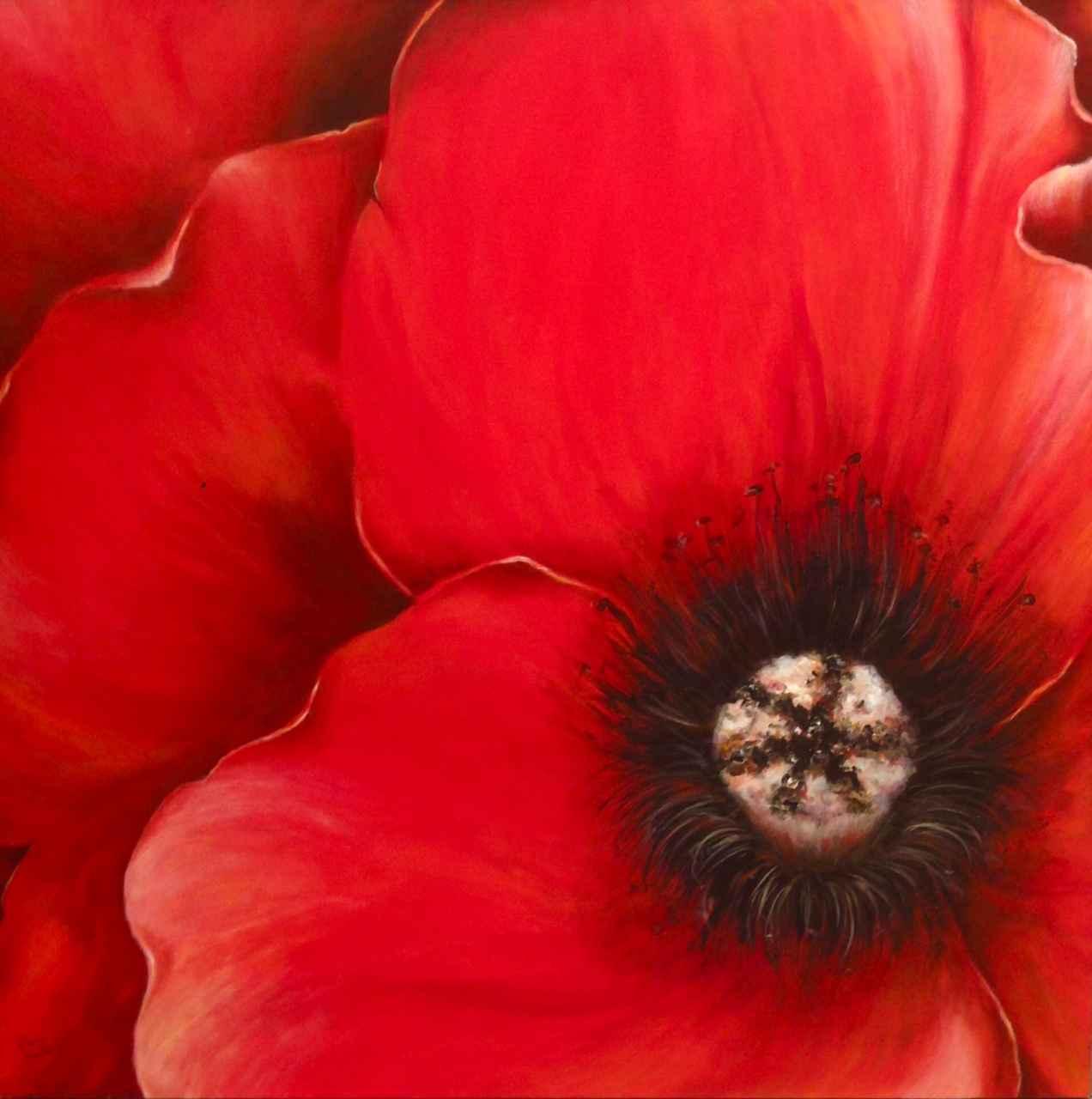 Red Poppy by  Doris Pontieri - Masterpiece Online