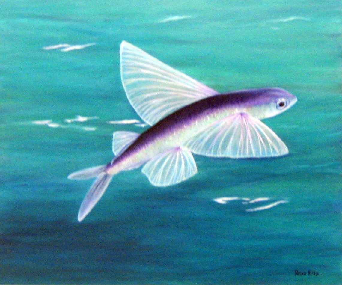 Flying Fish by  Rosemary Ellis - Masterpiece Online