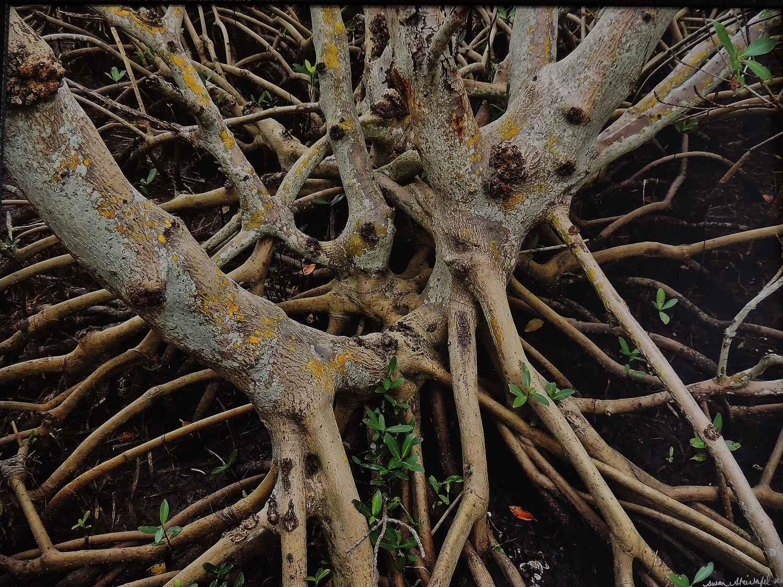 Mangroves by Ms. Susan Steinhafel - Masterpiece Online