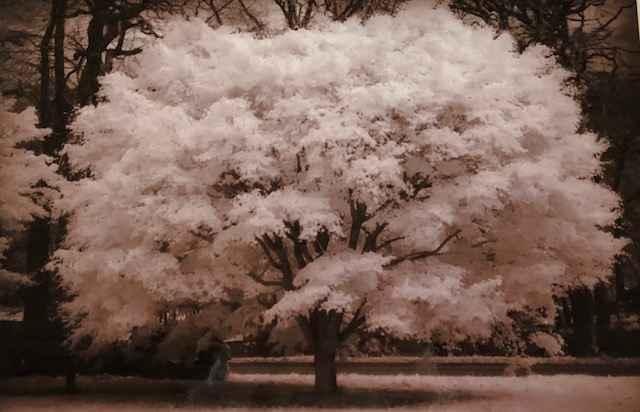 Perfect Tree by  Debra M. Gaines - Masterpiece Online