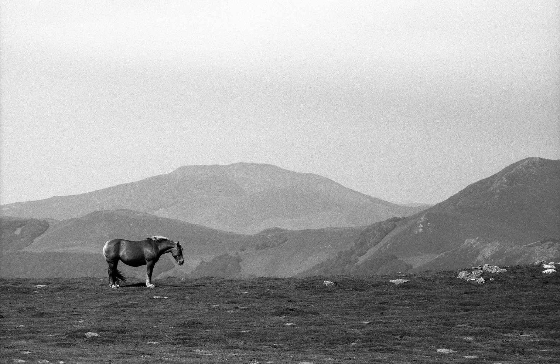Pyrenean Horse, Camin...