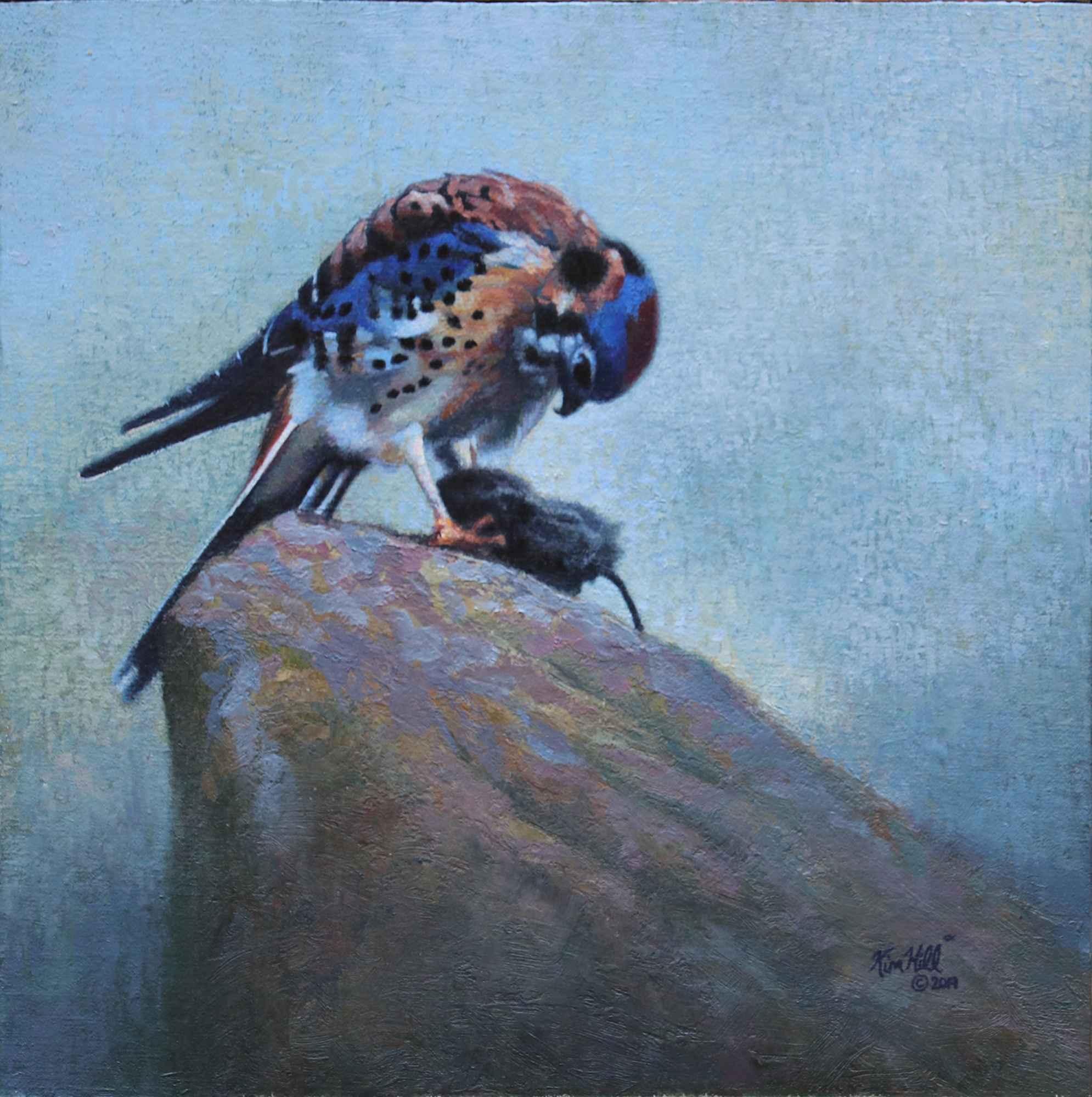 American Kestrel #1 by  Kim Hill - Masterpiece Online