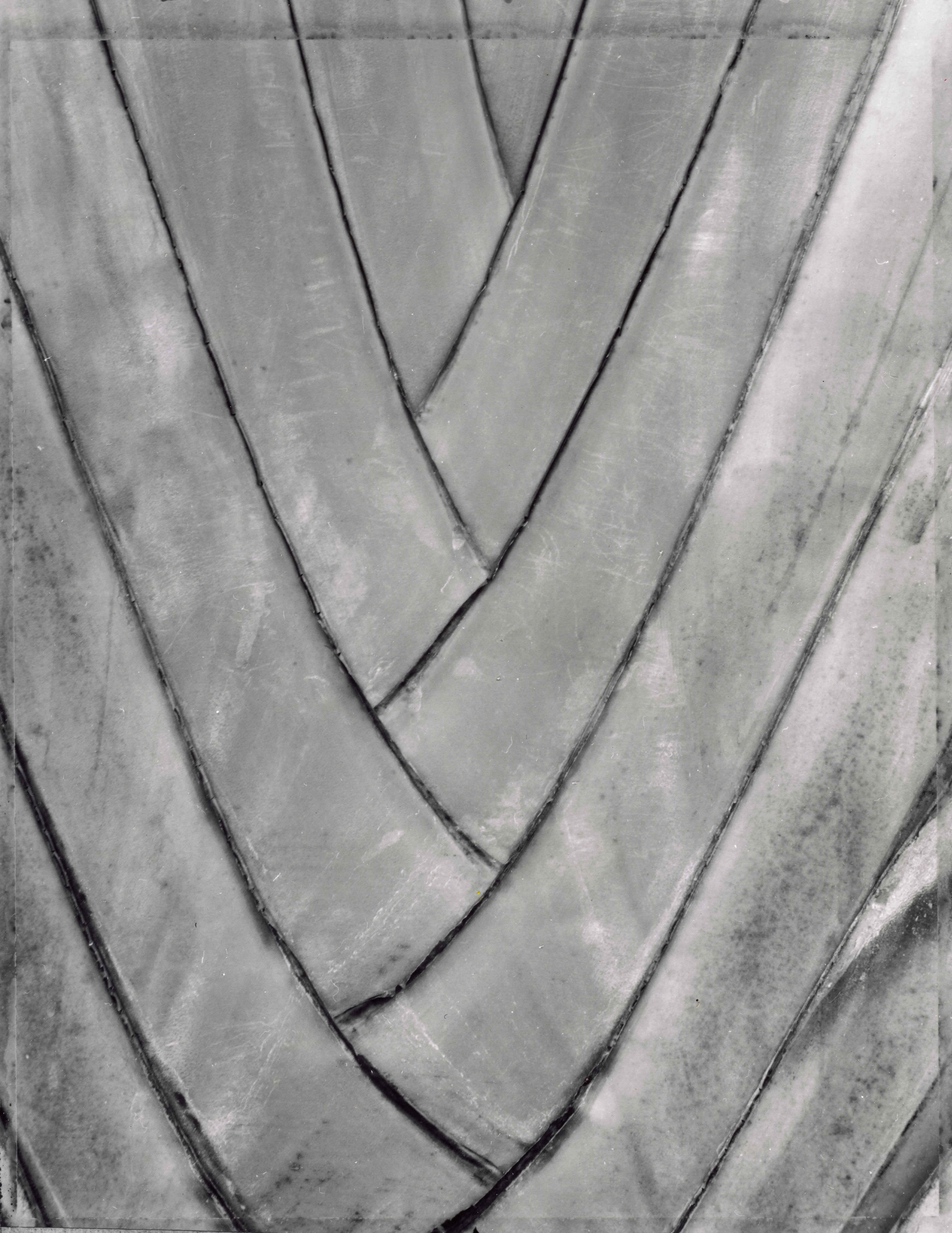 Palm Bark #2 by  Tom Haar - Masterpiece Online