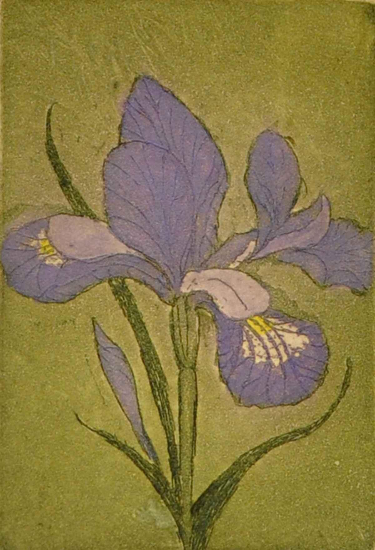Iris  by  Susan Baehmann