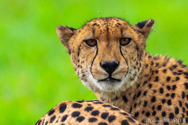Africa: Tu veux ma ph... by  William MESSMER - Masterpiece Online