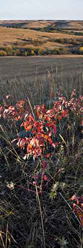 Sumac and Hill by  George Jerkovich - Masterpiece Online