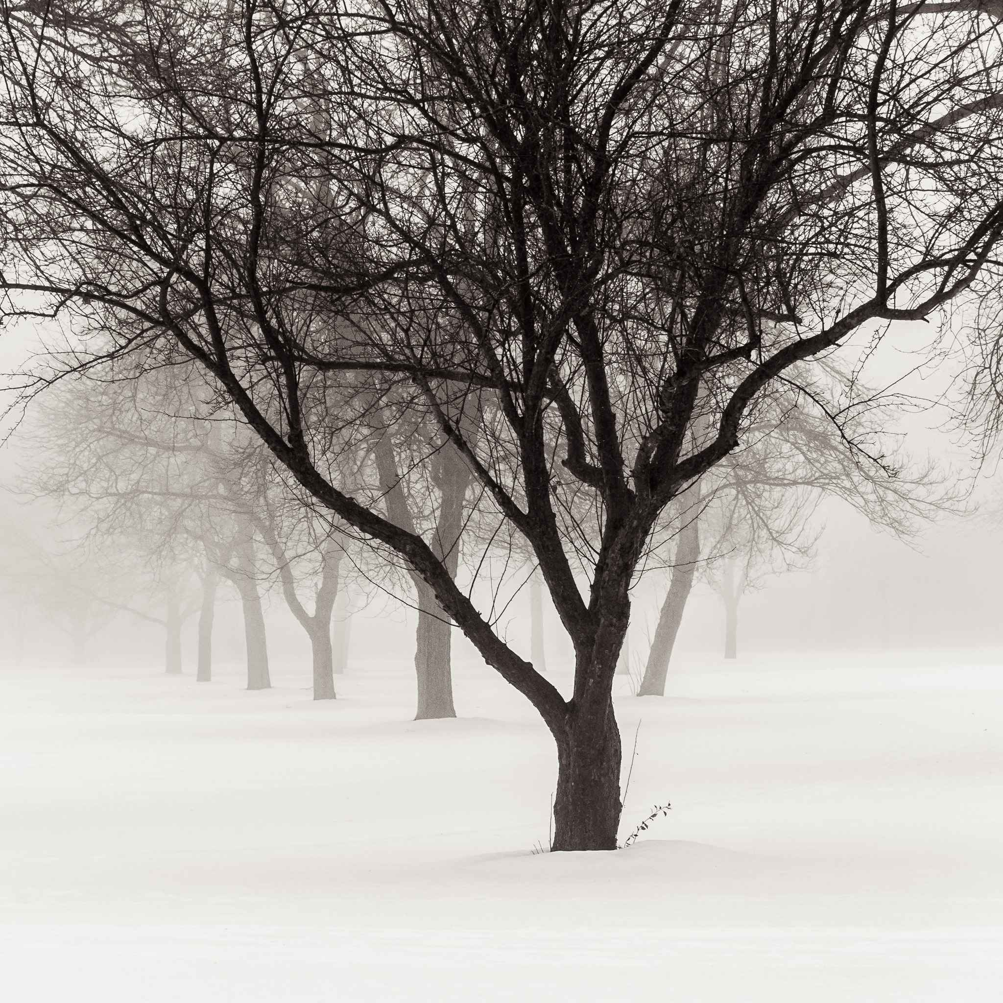 December Fog by  Michael Knapstein - Masterpiece Online