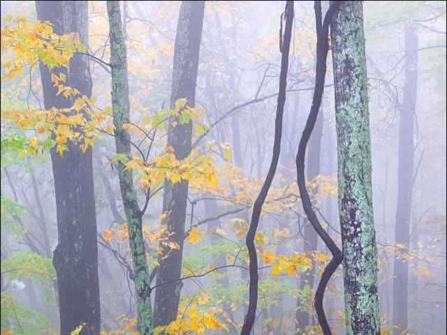 Golden Autumn Fog by  Steven Friedman - Masterpiece Online