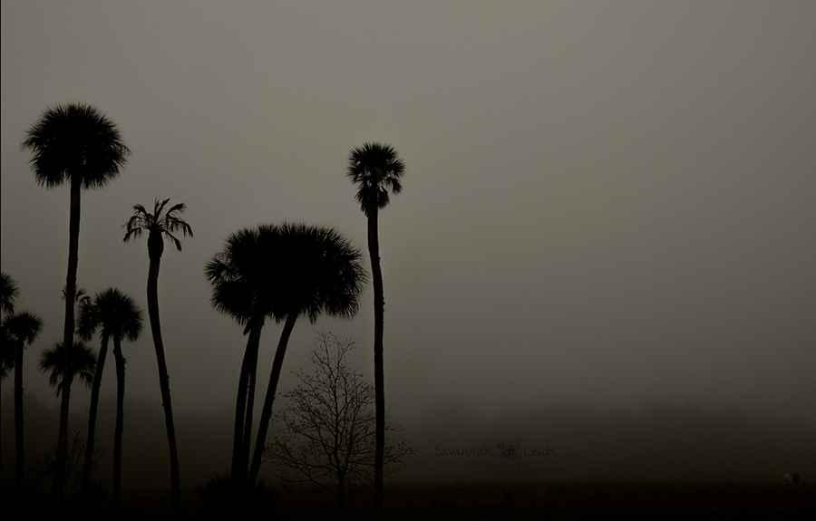 Dawn – Limited Ed. 6/... by  Savannah Leigh - Masterpiece Online