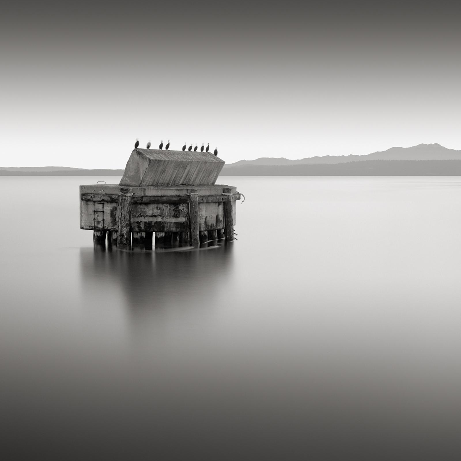 Ten Cormorants, Port ... by  David Fokos - Masterpiece Online