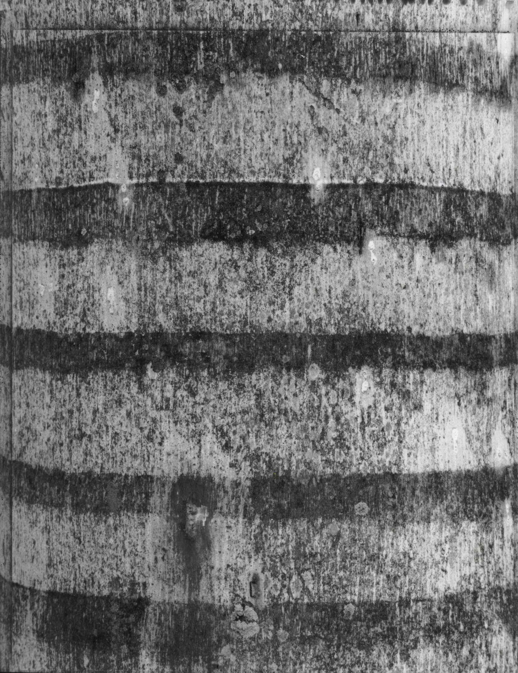 Palm Bark #9 by  Tom Haar - Masterpiece Online