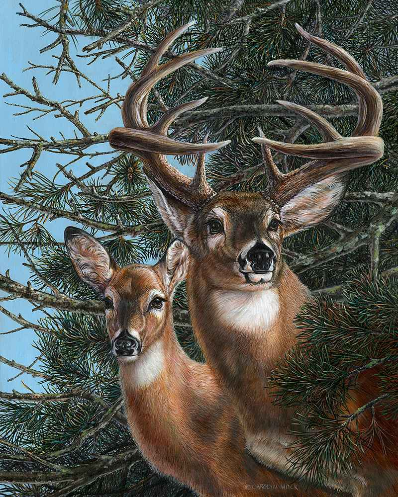 Edge of the Pines by  Carolyn Mock - Masterpiece Online