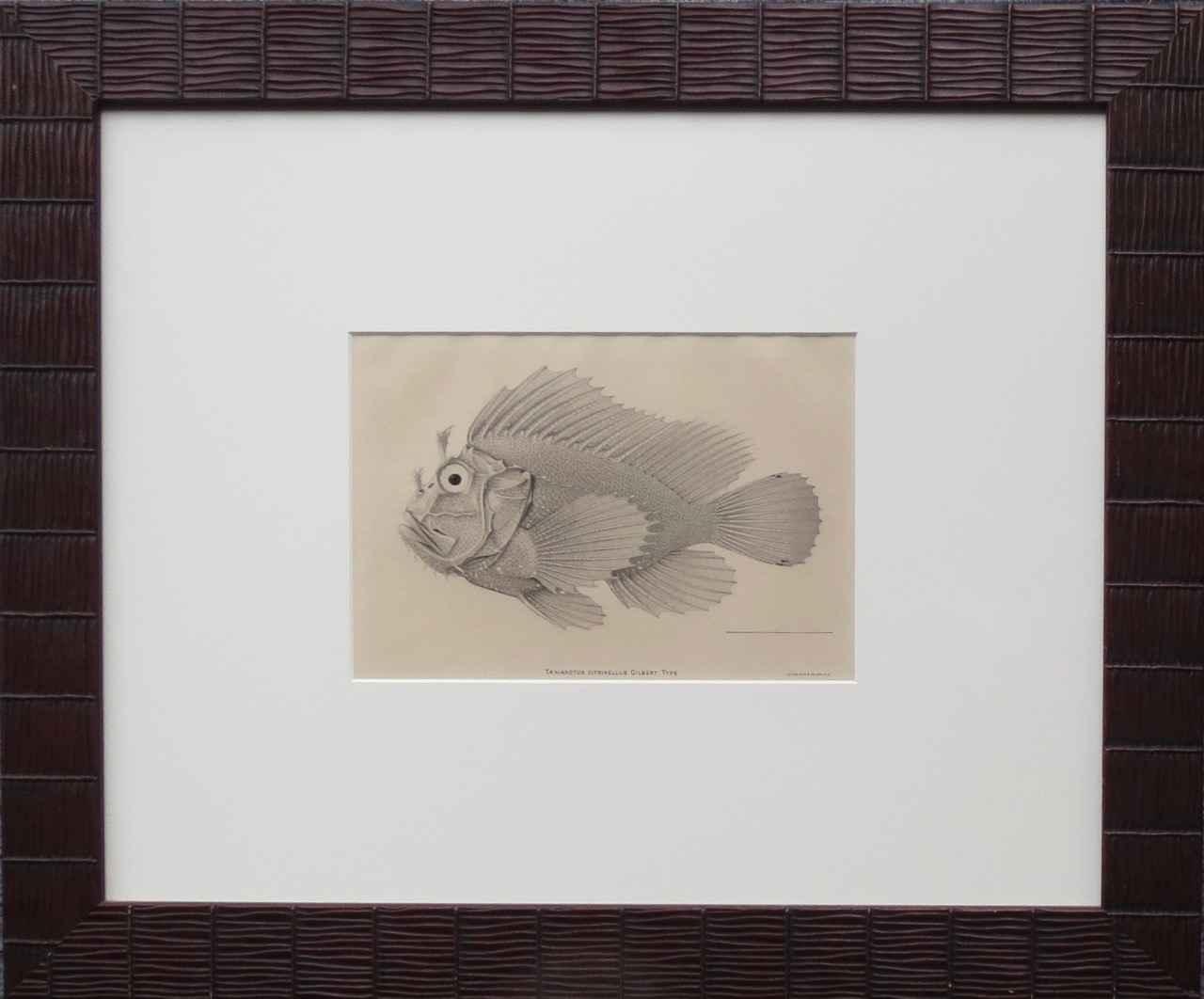 Fish Print_Taenianotu... by   Unknown - Masterpiece Online